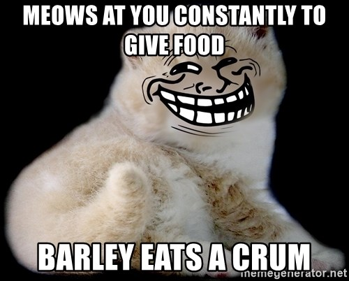 Trollcat - meows at you constantly to give food barley eats a crum