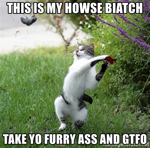 GTFO - THIS IS MY HOWSE BIATCH TAKE YO FURRY ASS AND GTFO