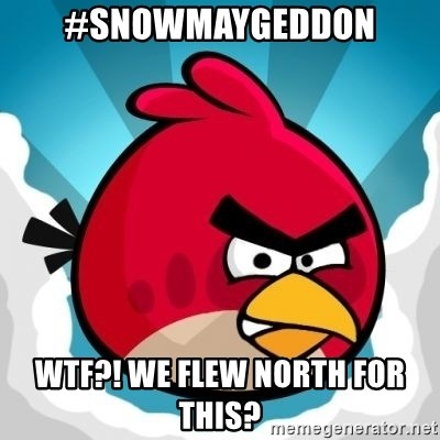 Angry Bird - #SNOWMAYGEDDON WTF?! WE FLEW NORTH FOR THIS?