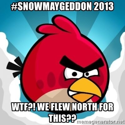 Angry Bird - #SNOWMAYGEDDON 2013 WTF?! wE FLEW NORTH FOR THIS??