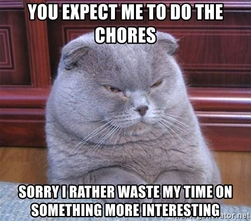 Serious Cat - you expect me to do the chores sorry i rather waste my time on something more interesting