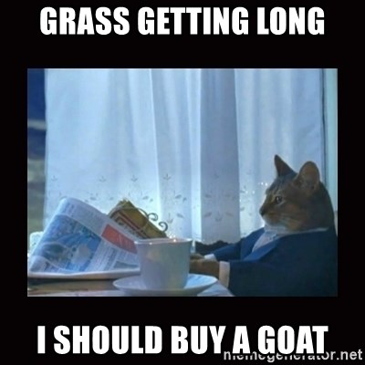 i should buy a boat cat - Grass getting long I should buy a goat