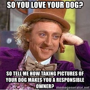Willy Wonka - So you love your dog? So tell me how taking pictures of your dog makes you a responsible owner?