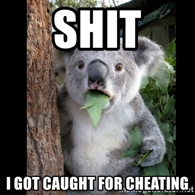 Koala can't believe it - shit i got caught for cheating