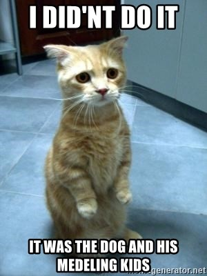 Sadcat - i did'nt do it  it was the dog and his medeling kids