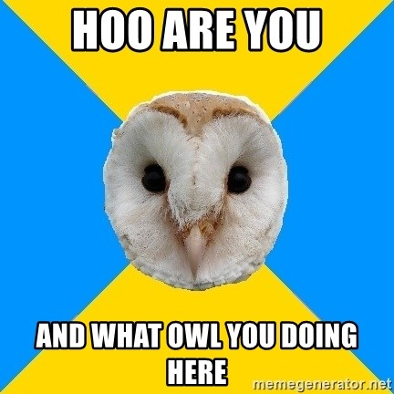 Bipolar Owl - hoo are you and what owl you doing here