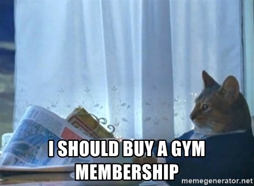 newspaper cat realization -  I should buy a gym membership