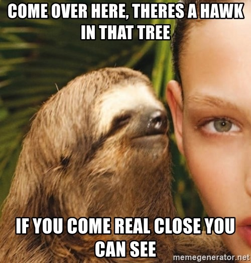 The Rape Sloth - Come over here, THERES A HAWK IN THAT TREE  if you come real close you can see