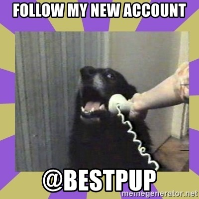 Yes, this is dog! - FOLLOW MY NEW ACCOUNT @BESTPUP
