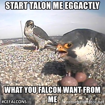 #CEFalcons - Start talon me eggactly What you falcon want from me