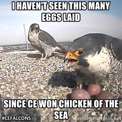 #CEFalcons - i haven't seen this many eggs laid SINCe CE WON CHICKEN OF THE SEA