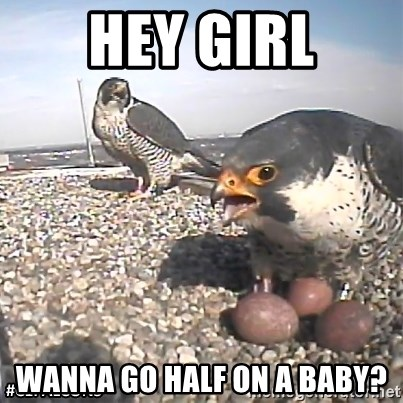 #CEFalcons - Hey girl Wanna go half on a baby?