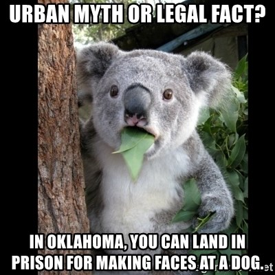Koala can't believe it - Urban Myth or Legal Fact? In Oklahoma, you can land in prison for making faces at a dog.