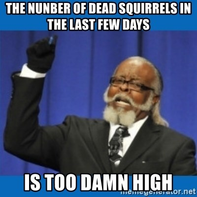 Too damn high - the nunber of dead squirrels in the last few days is too damn high