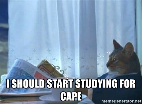 Sophisticated Cat -  I should start studying for cape
