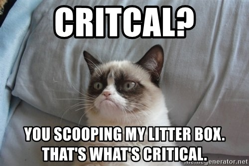 Grumpy cat good - Critcal? You scooping my litter box.  That's what's Critical.