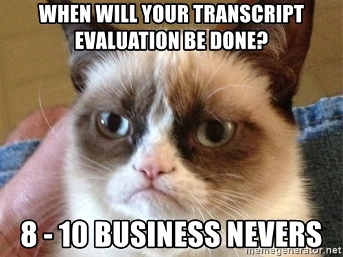 Angry Cat Meme - When will your transcript evaluation be done? 8 - 10 business nevers