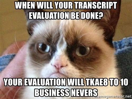 Angry Cat Meme - When will your transcript evaluation be done? your evaluation will tkae8 to 10 business nevers
