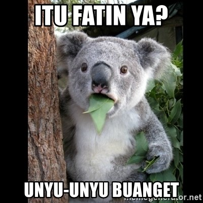 Koala can't believe it - ITU FATIN YA? UNYU-UNYU BUANGET