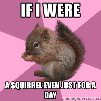 Shipper Squirrel - IF I WERE A SQUIRREL EVEN JUST FOR A DAY