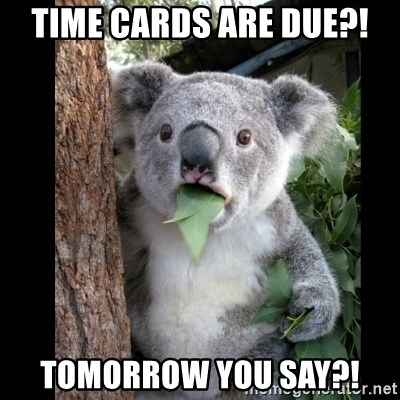 Koala can't believe it - Time cards are due?! Tomorrow you say?!