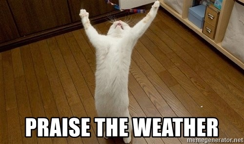 praise the lord cat -  PRAISE THE WEATHER