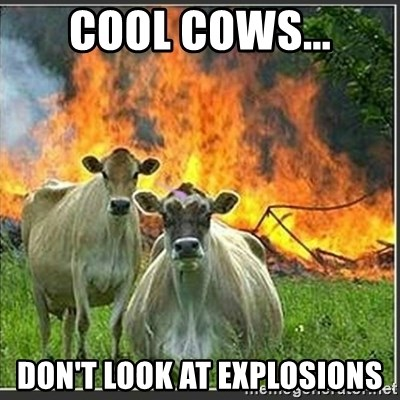 Evil Cows - COOL COWS... dON'T LOOK AT EXPLOSIONS
