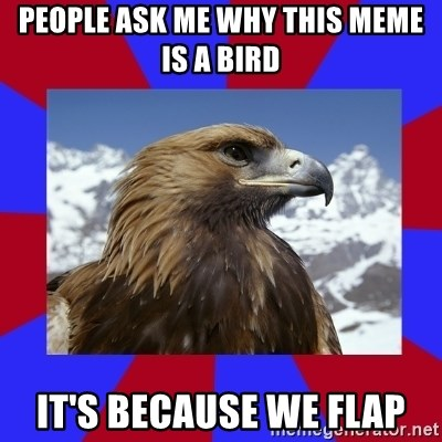 Autistic Eagle - People ask me why this meme is a bird it's because we flap