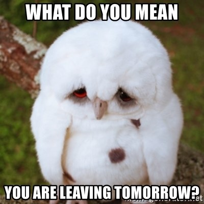 Sad Owl Baby - what do you mean you are leaving tomorrow?