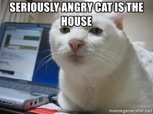 Serious Cat - seriously angry cat is the house