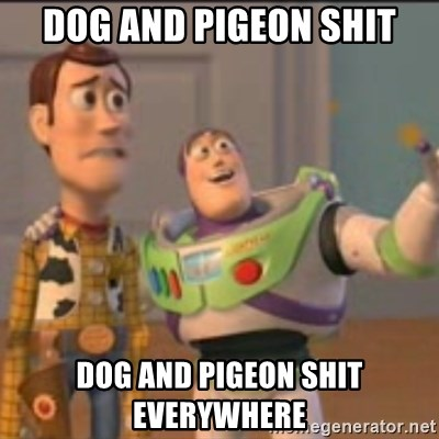 Buzz - dog and pigeon shit dog and pigeon shit everywhere