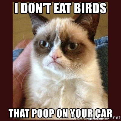 Tard the Grumpy Cat - i don't eat birds that poop on your car