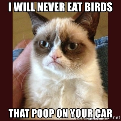 Tard the Grumpy Cat - i will never eat birds that poop on your car
