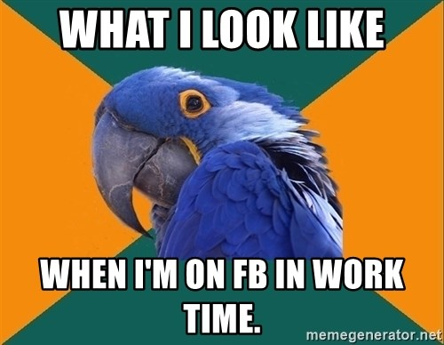 Paranoid Parrot - WHAT I LOOK LIKE WHEN I'M ON FB IN WORK TIME.