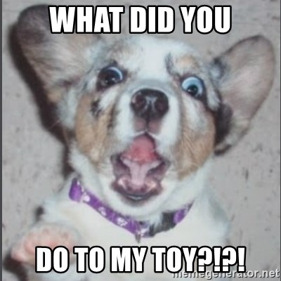 Scotty Free (Casey Anthony's Dog) - WHAT DID YOU DO TO MY TOY?!?!