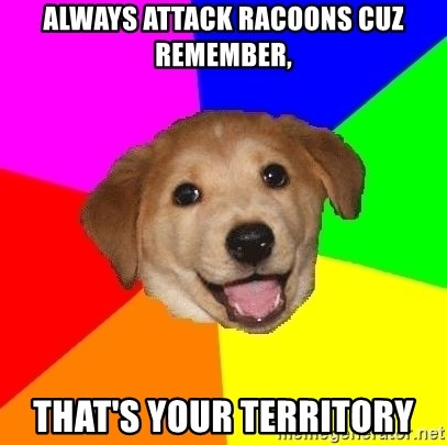 Advice Dog - always attack racoons cuz remember, that's your territory