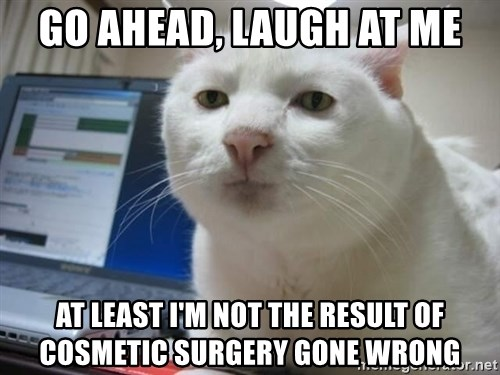 Serious Cat - go ahead, laugh at me at least I'm not the result of cosmetic surgery gone wrong