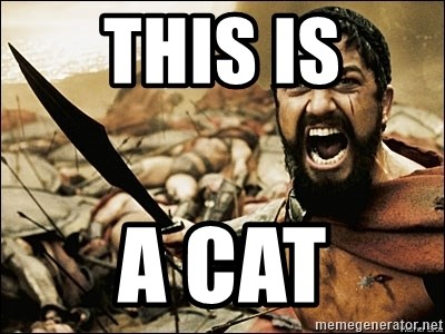 This Is Sparta Meme - THIS is A CAT