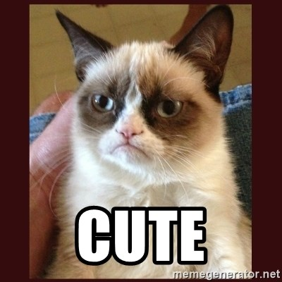 Tard the Grumpy Cat -  CUTE