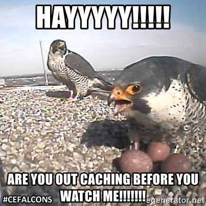 #CEFalcons - HAYYYYY!!!!! ARE YOU OUT CACHING BEFORE YOU WATCH ME!!!!!!!