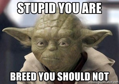 Master Yoda - Stupid you are Breed you should not