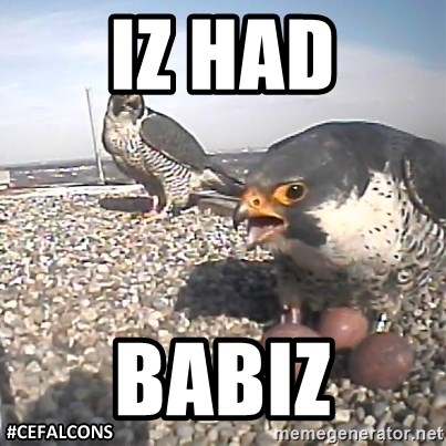 #CEFalcons - IZ HAD BABIZ