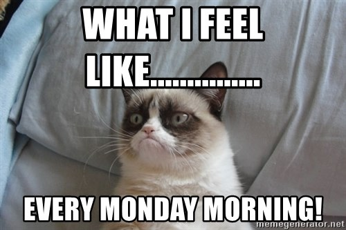 Grumpy cat good - WHAT I FEEL LIKE............... EVERY MONDAY MORNING!