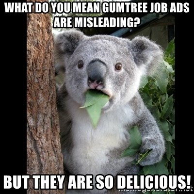 Koala can't believe it - What Do you mean GumTree job Ads are misleading? but they are so delicious!