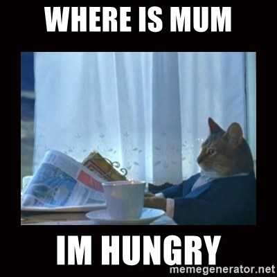 i should buy a boat cat - WHERE IS MUM  IM HUNGRY
