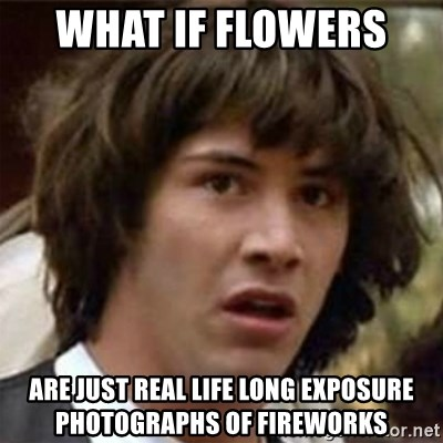 what if meme - What if flowers  Are just real life long exposure photographs of fireworks