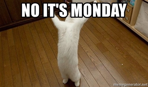 praise the lord cat - NO IT'S MONDAY