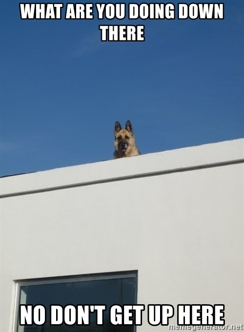 Roof Dog - WHAT ARE YOU DOING DOWN THERE NO DON'T GET UP HERE