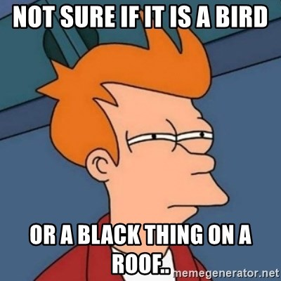 Not sure if troll - NOT SURE IF IT IS A BIRD OR A BLACK THING ON A ROOF..