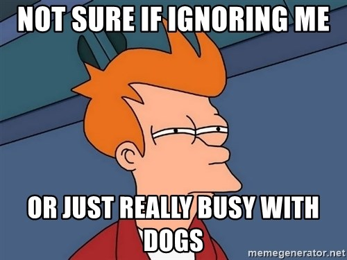 Futurama Fry - Not sure if ignoring me Or just really busy with dogs